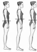 Какие пропорции существуют между частями тела человека – Идеальные пропорции тела человека :: SYL.ru