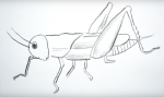 Рисуем кузнечика – Как нарисовать кузнечика