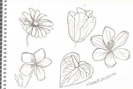 Урок рисования цветов поэтапно акварелью