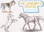 Как нарисовать правильно лошадь поэтапно карандашом – Как нарисовать лошадь карандашом поэтапно