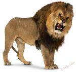Картинки лев для детей нарисованные – Лев картинка для детей