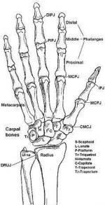 Кисти руки человека рисунок – Скелет кисти руки человека рисунок с подписями