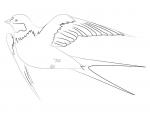 Рисуем ласточку – Как нарисовать ласточку карандашом поэтапно. Учимся рисовать ласточку