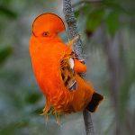 Рисунки красивые птицы – Картинки красивые птицы (35 фото) • Прикольные картинки и юмор