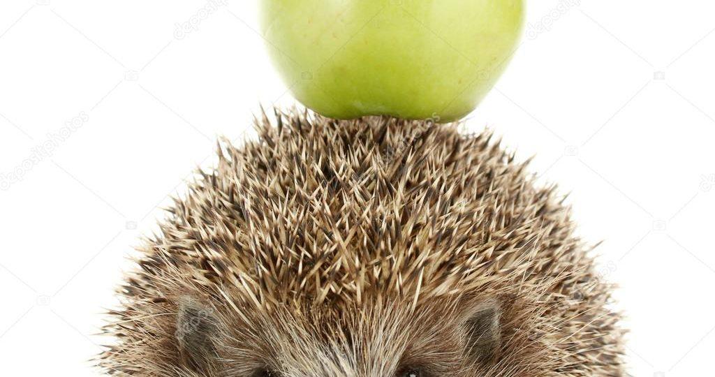 Ежик с яблоками рисунок – Картинки ежик с яблоками ...