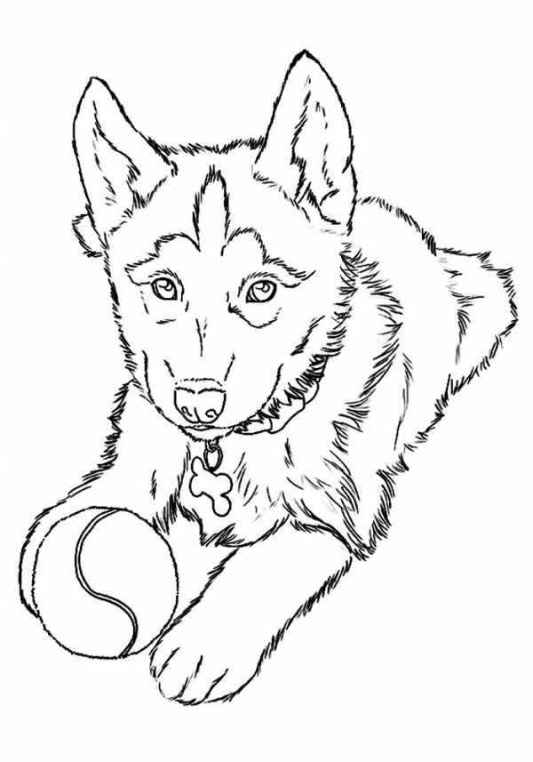 картинка для детей собака щенок фотографии картинки