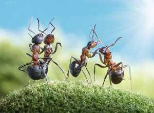 Картинки муравей для детей нарисованные – Раскраска ...
