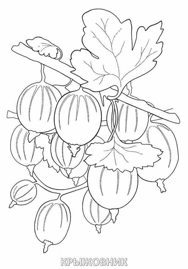 Раскраска ягодка – Раскраска ягоды распечатать — Артист-Ойл