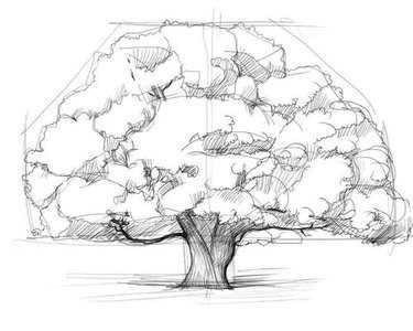 1cfb7797ee4b Рисунки для детей деревьев – 36 карточек в коллекции «Рисование ...